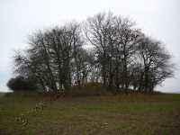 Großsteingrab Nadelitz 8